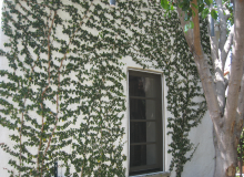 Vines on Wall.png